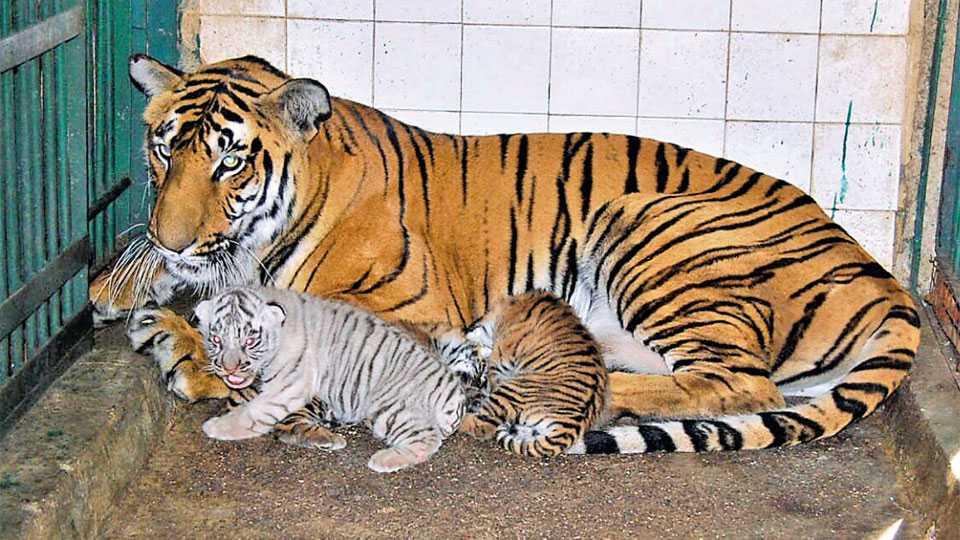 aurangabad-zoo
