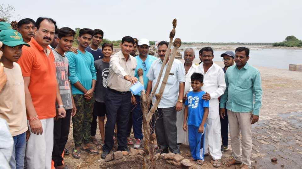 Plantation from Environment Day outside of bhima river
