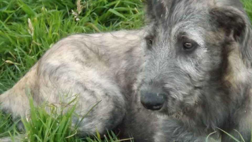 भटक्या कुत्र्यांचा त्रास होणाऱ्यांना नुकसानभरपाई द्यायला हवी