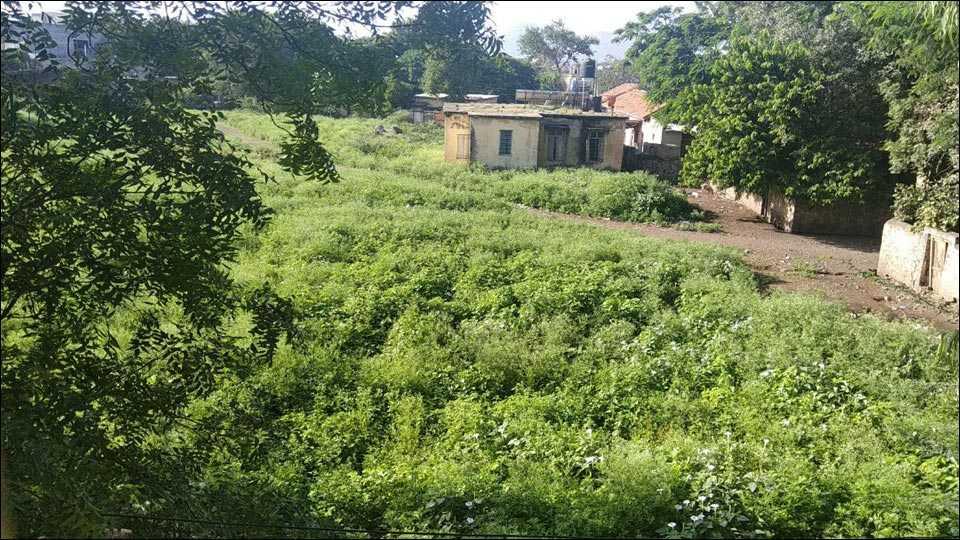 जैताणे (ता. साक्री) : येथील आरोग्य केंद्र परिसरात वाढलेले गाजरगवत व काटेरी झुडपे.