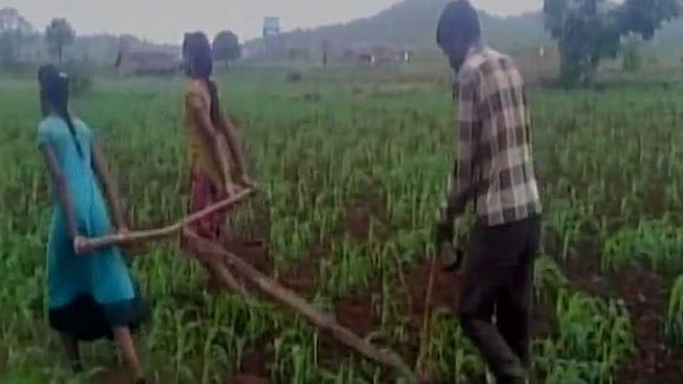 madhya pradesh due financial crisis farmer use his two daughter to pull the plough field