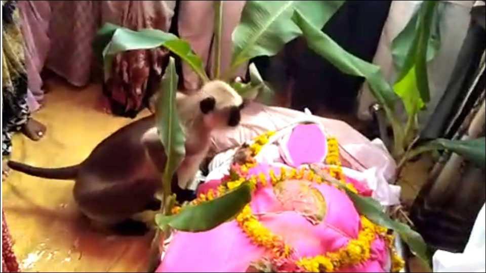 ...आणि मृत शरीराशेजारी माकड येऊन बसले!