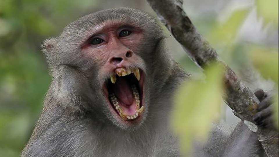 monkey kills baby