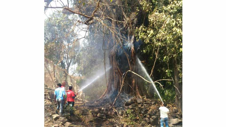 There was a fire on a large tree near Ramwadi on the mumbai goa highway