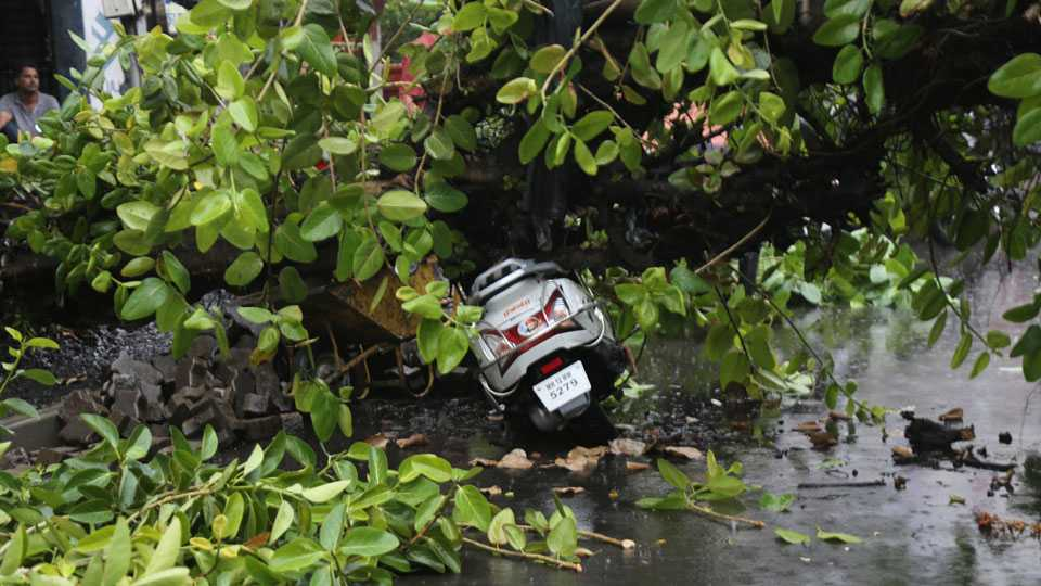 Rain in pune trees collapse