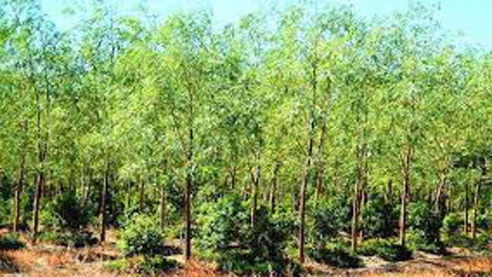 20 percent forest area in the state The need for planting 400 crores of trees