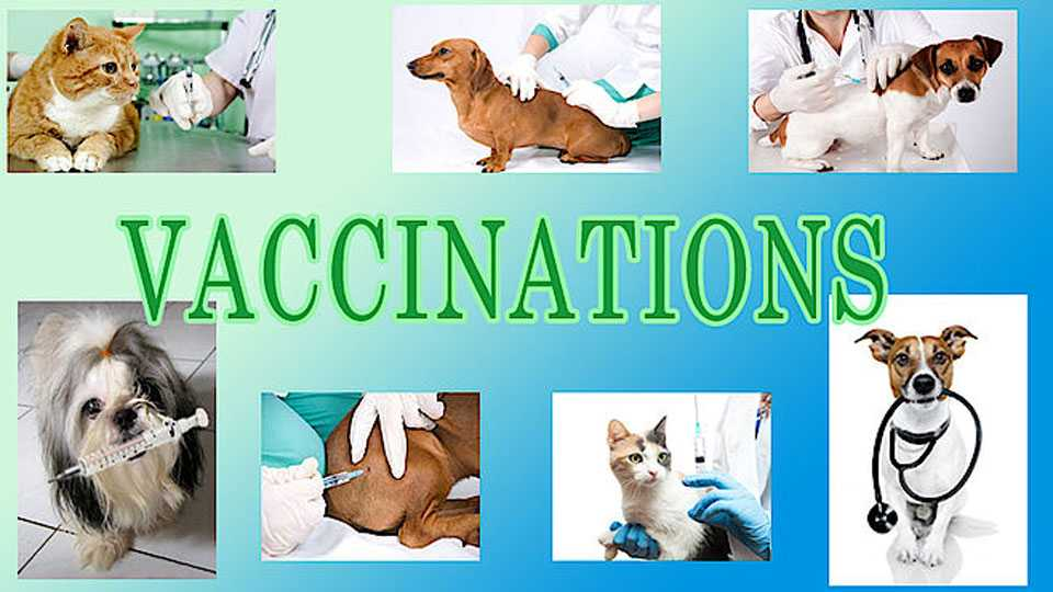 vaccinations
