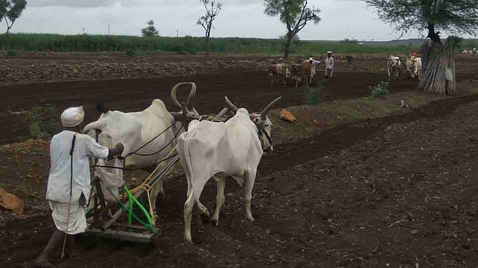 farmers starred sowing for kharip