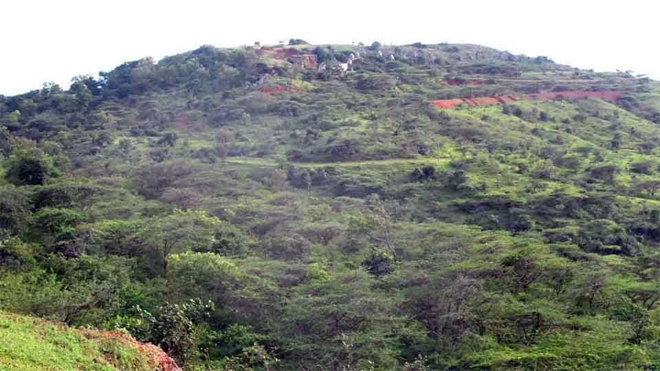 भोसे -दंडोबा डोंगरावरील गर्द वनराई