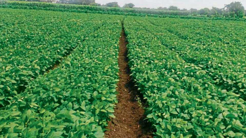 ज्या शेतमालाचा कल जास्त असेल, त्याची लागवड वाढविणे गरजेचे आहे.