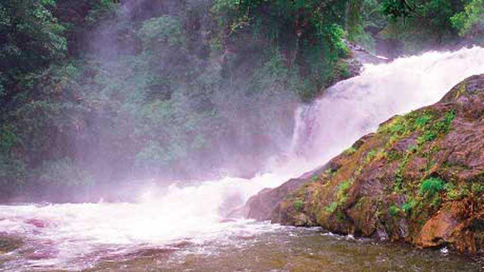 Transforming Ashoka Falls to Echo Tourism