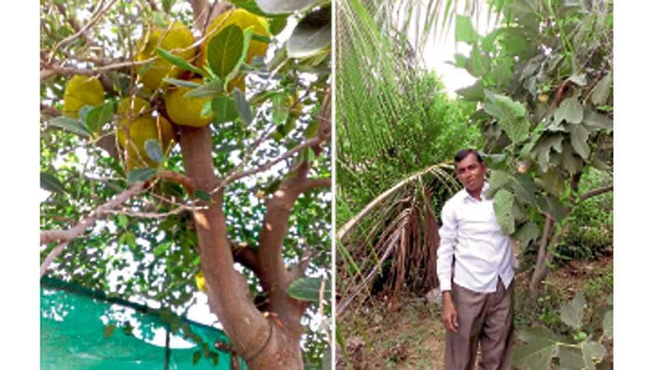 वांगी (जि. बीड) येथील दिलीप बजगुडे यांनी विविध फळपिकांची बाग फुलवली आहे.