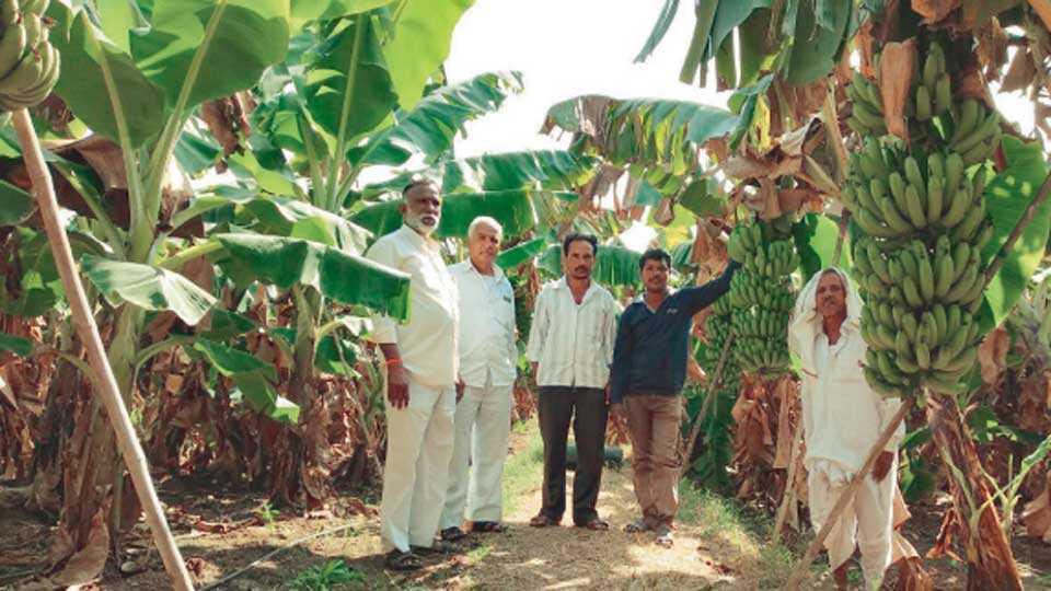 माळकिन्ही (जि. यवतमाळ) - केळी पिकाची माहिती देताना शेतकरी लक्ष्मण मदने व इतर.