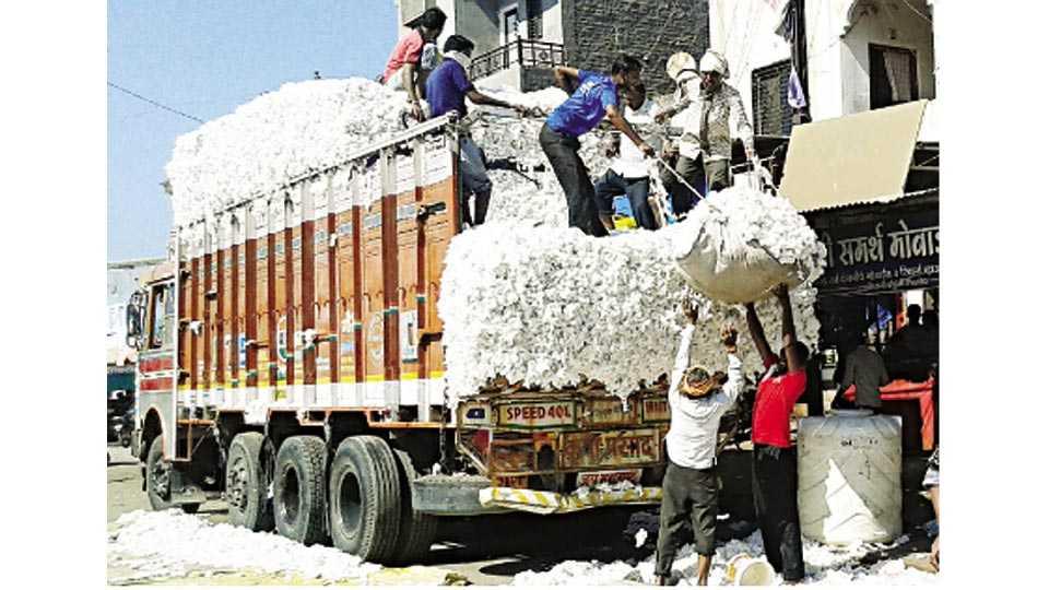 शिंदखेडा - जिल्ह्यात ग्रामीण भागात कापसाची खेडा खरेदी सुरू आहे. व्यापारी खरेदी केलेला कापूस गुजरात राज्यात विक्रीसाठी पाठवतात. खेडा खरेदीतून एकत्र झालेला कापूस ट्रकमध्ये भरताना मजूर.
