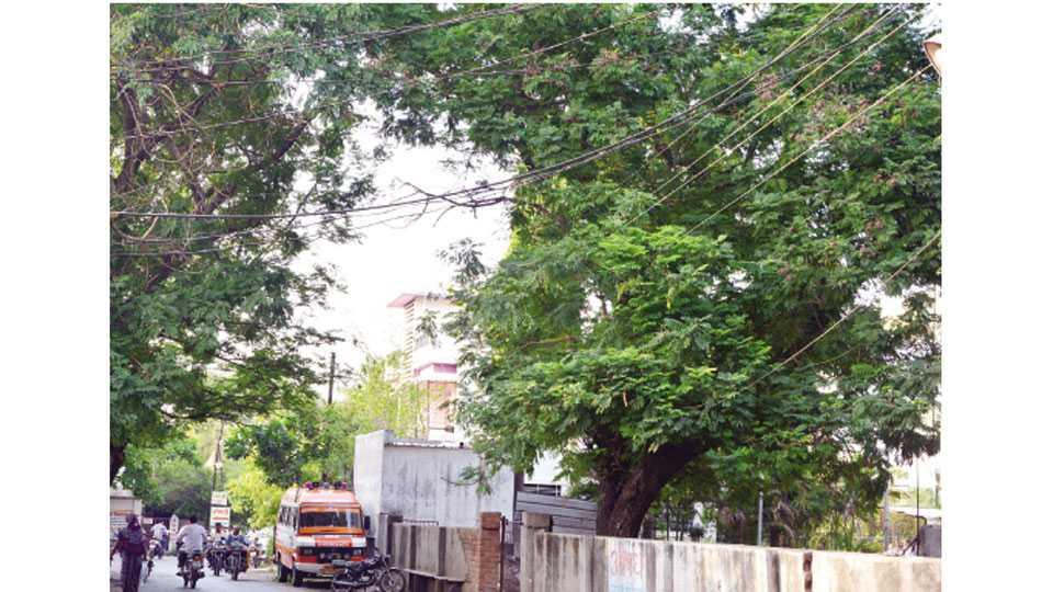 जळगाव - पारिख पार्क उद्यानाजवळ वीजतारांमध्ये अडकलेल्या झाडाच्या फांद्या.