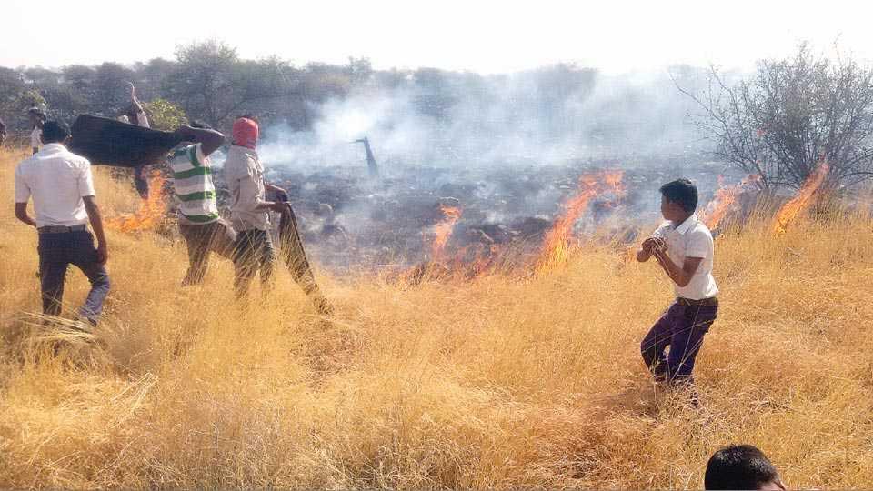 लामकानी (ता. धुळे) - ग्रामस्थांकडून संवर्धित गोवर्धन डोंगरावरील राखीव कुरणाला गुरुवारी दुपारी लागलेली आग जीव धोक्यात घालून ओल्या गोणपाटांनी विझविताना विद्यार्थी, तरुण व ग्रामस्थ.
