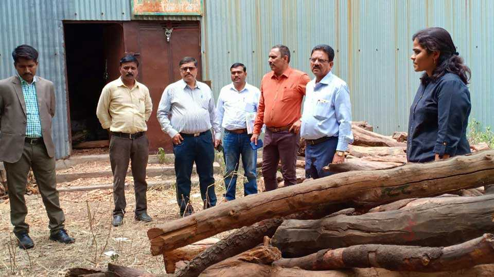 Sandal plants will Forest department give encourage