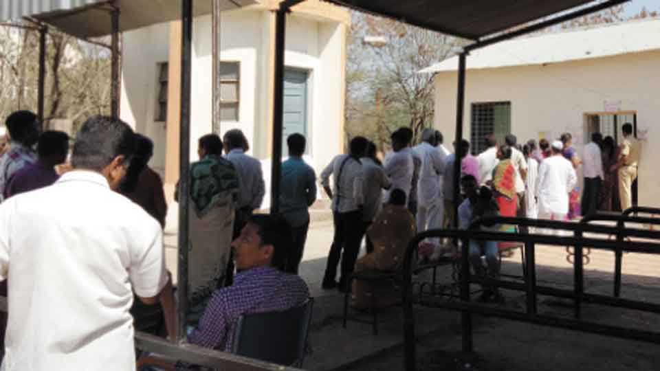 सोलापूर - हैदराबाद रोडवरील जिल्हा पशुवैद्यकीय दवाखान्यात मतदानासाठी लागलेली मतदारांची रांग.