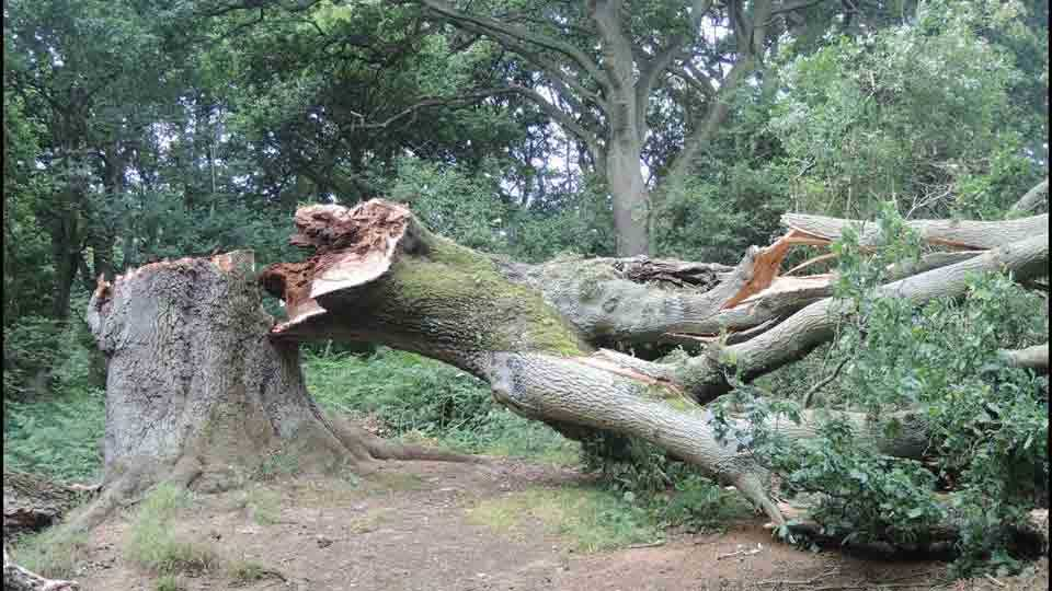 The tree collapses on three womens womens injured