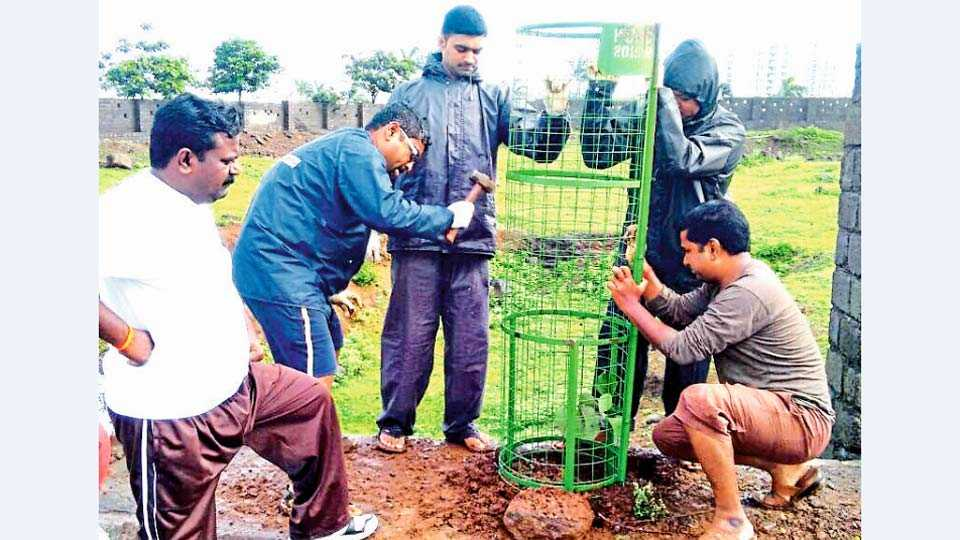 प्राधिकरण,मोशी - येथील वृक्षमित्र परिवारामार्फत, झाडांचे संगोपन आणि त्यांच्यासभोवताली संरक्षक जाळी बसविताना सदस्य.