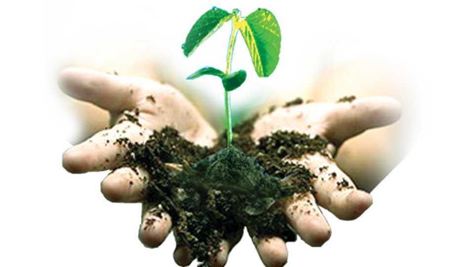 Tree-Plantation