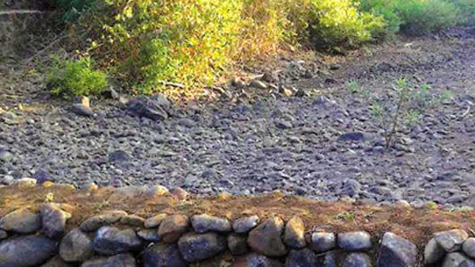 साखरपा - येथील काजळी नदीवर बांधण्यात आलेला वनराई बंधारा कोरडा पडला आहे.