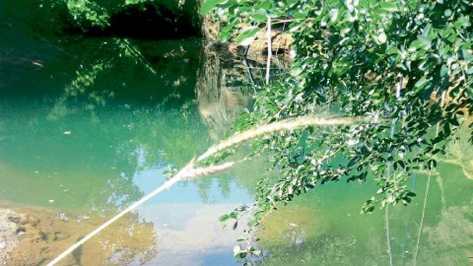 लोधवडे - भर उन्हाळ्यातही विहिरी पाण्याने भरलेल्या आहेत.