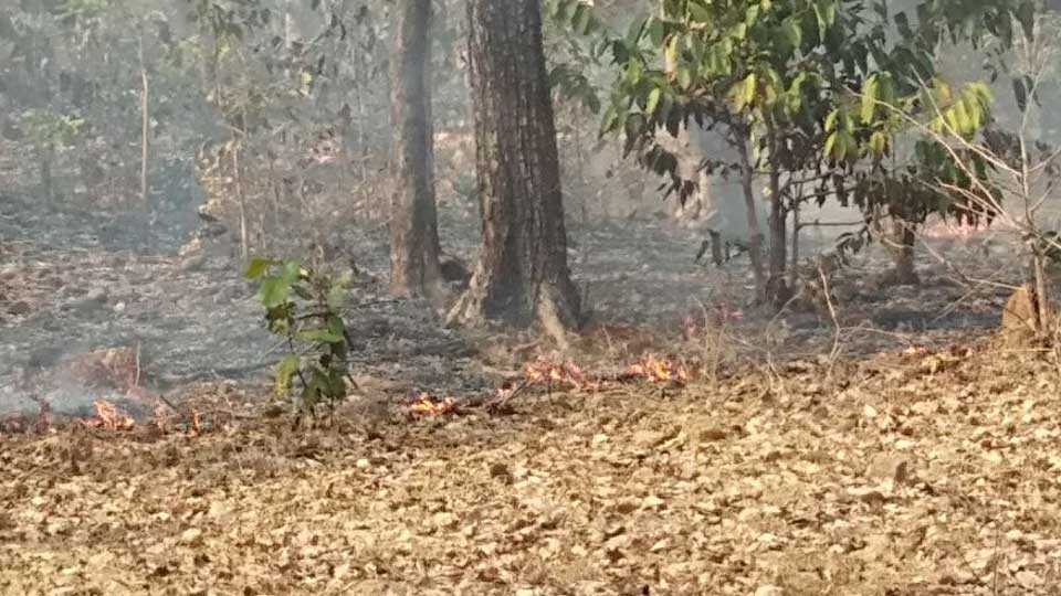 marathi news gadchiroli forest fire forest department ignore
