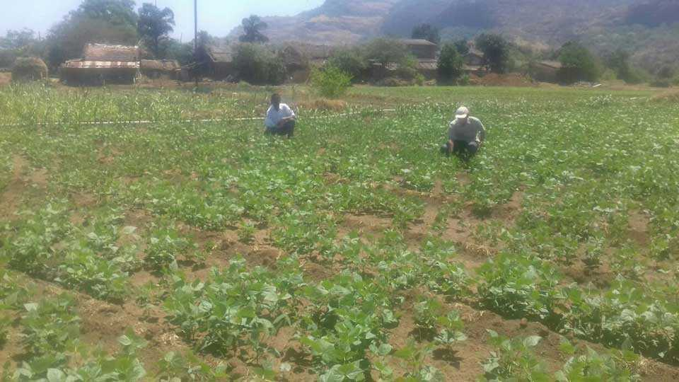 takve budruk news group of farmers together for irrigation