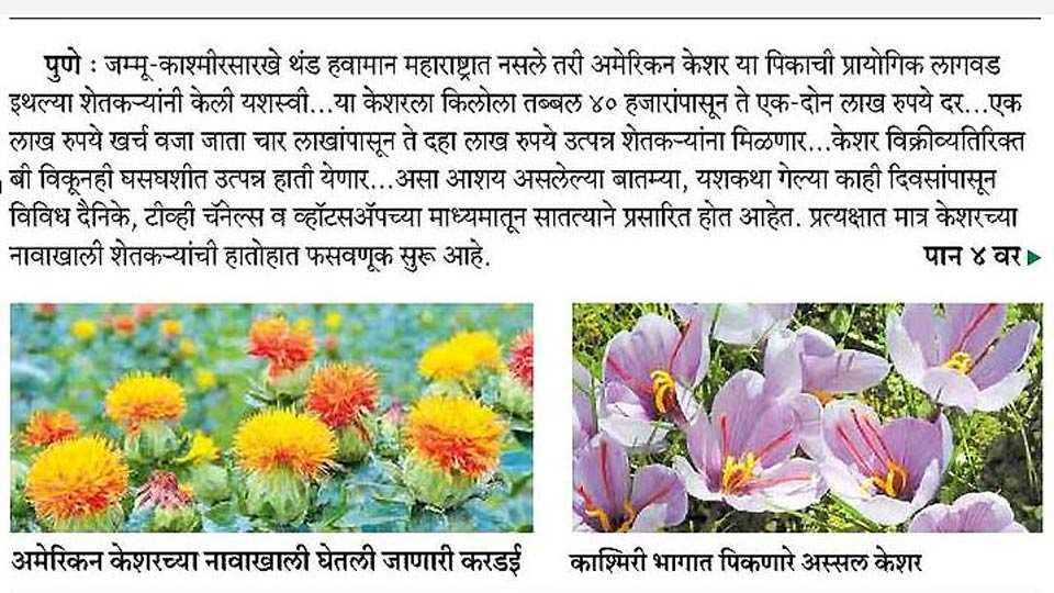 The farmer's farming in the name of Saffron