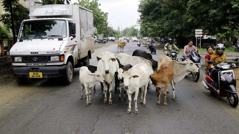 animals block road and make traffic