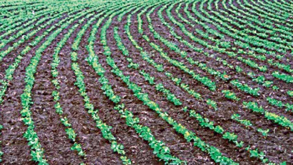 crop-water-conservation