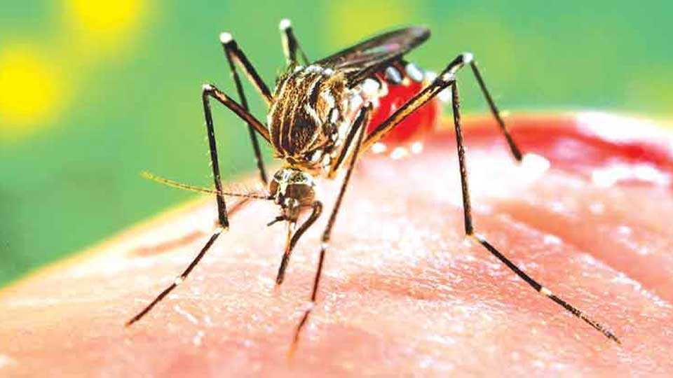 girl die in dengue