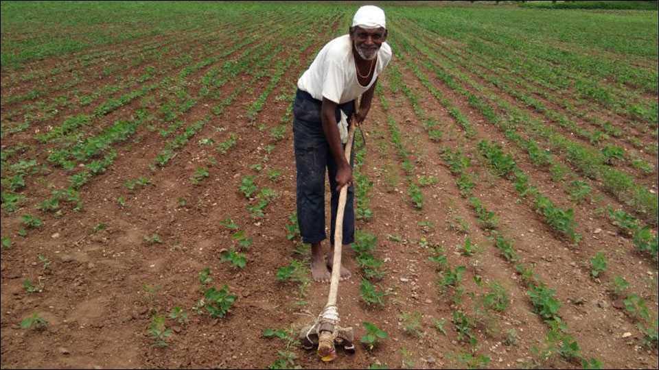 बैलाविना फावड्याला पास लावून डवरणीचा शेतकऱ्याचा अनोखा प्रयोग