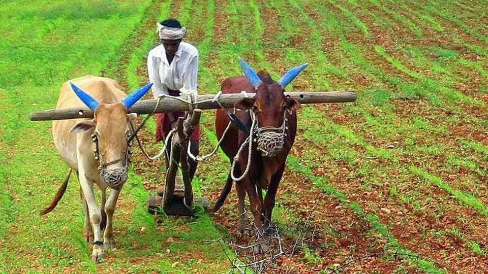 beed news marathi news maharashtra news farmer strike