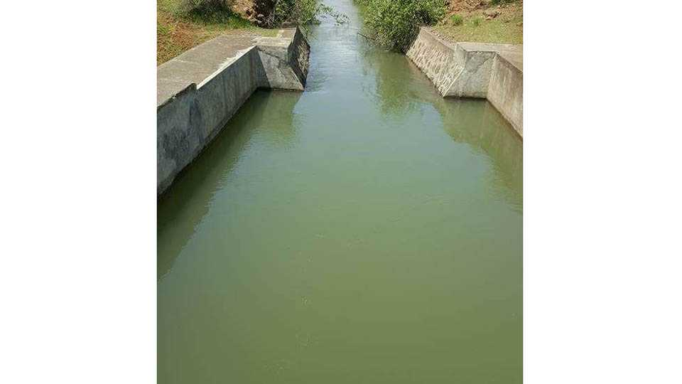 marathi news pune news river Irrigation shirsai