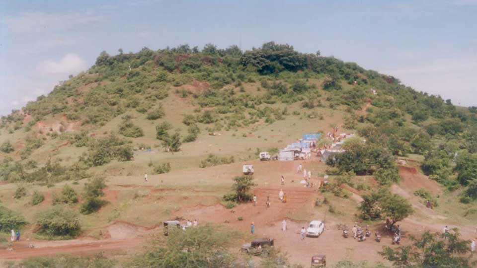 plantation on hills