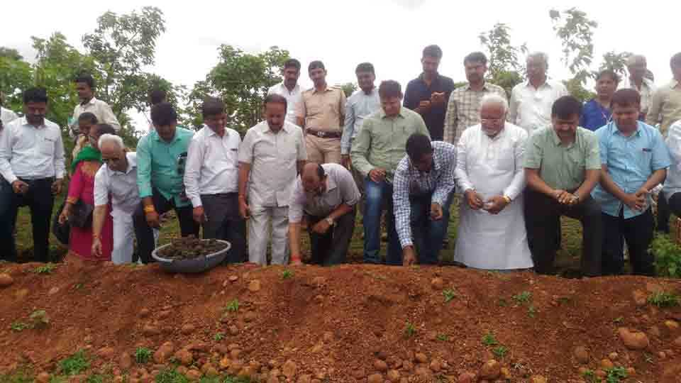 Nanded Collector planted fifty thousand seed balls