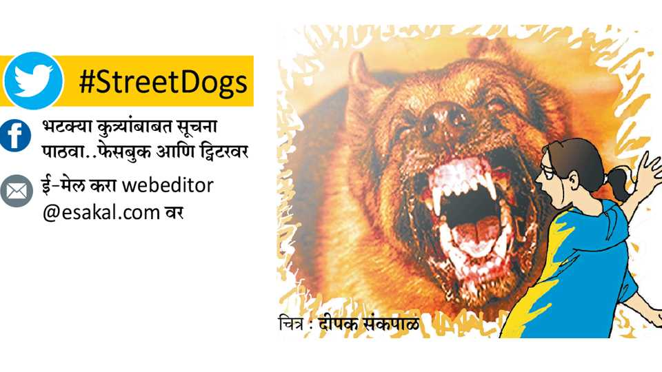 street dogs issue in pune