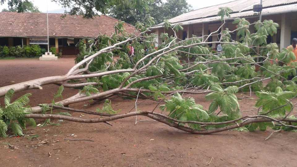 Mahad: 20 girls injured in tree collapse in school
