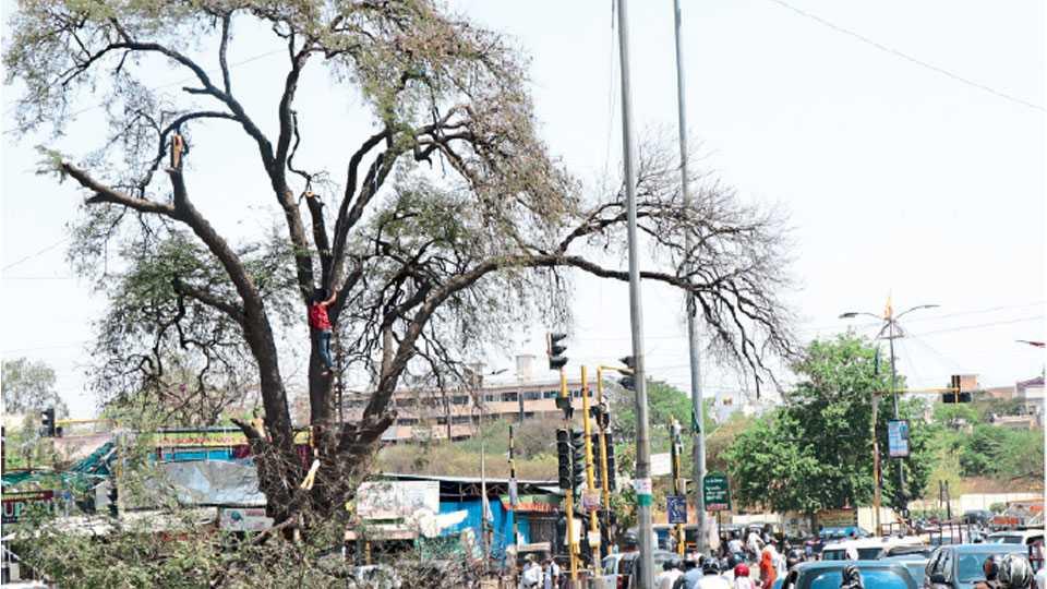 tree-aurangabad