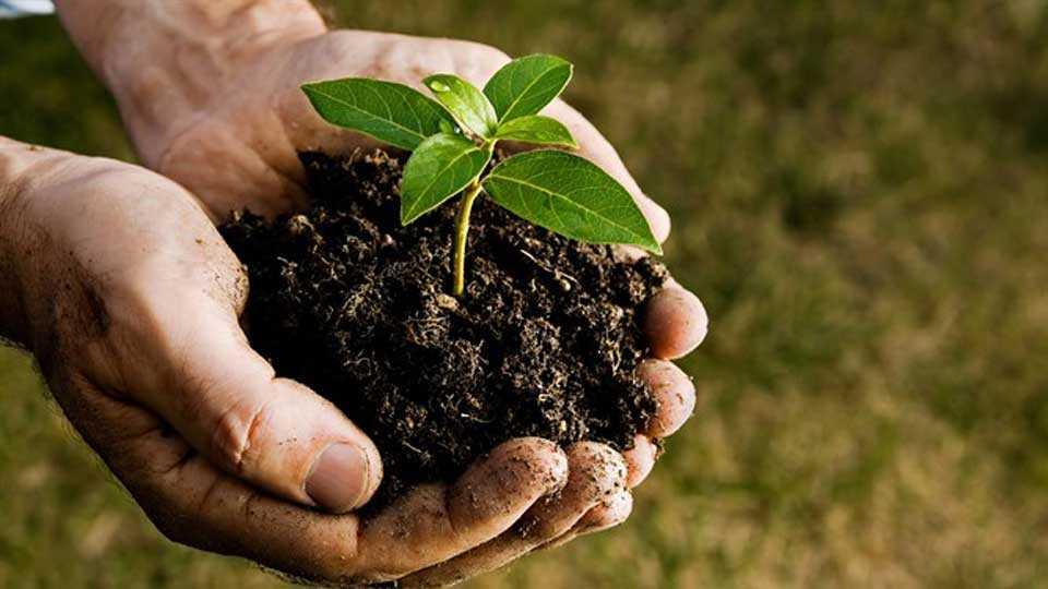 Pratik  Bavdekar, Planting plants