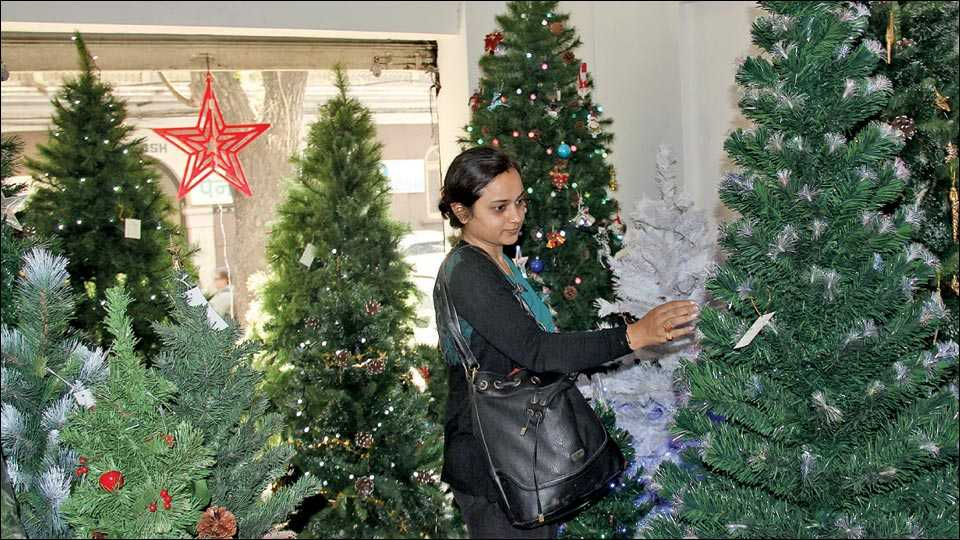 कॅम्प ः नाताळानिमित्त विविध दुकानांमध्ये आकर्षक ख्रिसमस ट्री विक्रीसाठी ठेवण्यात आली आहेत. त्यांची पाहणी करताना युवती.
