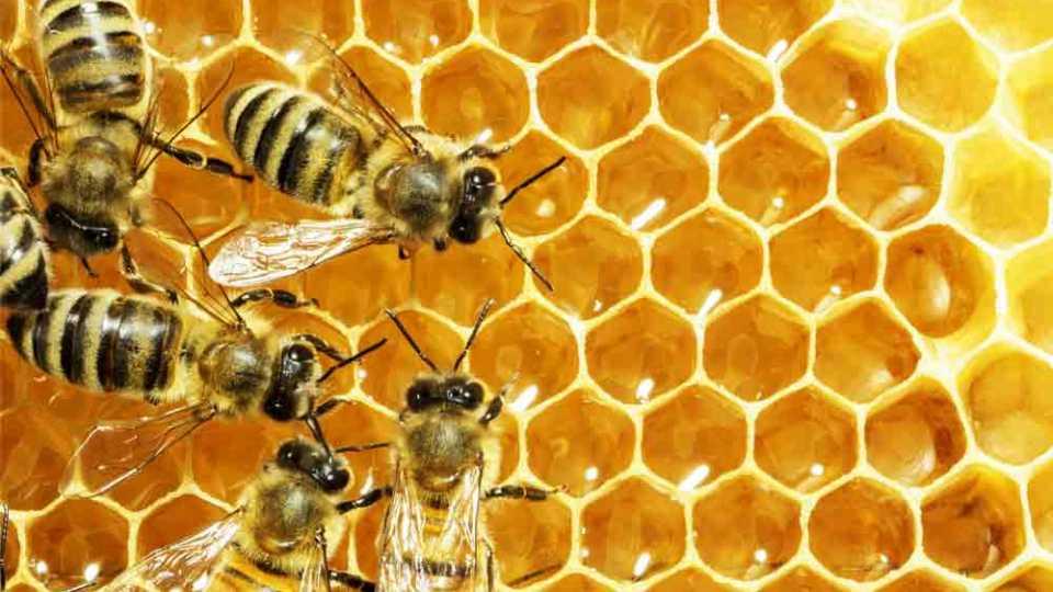 मधमाशी पालनातून महिला सक्षमीकरण