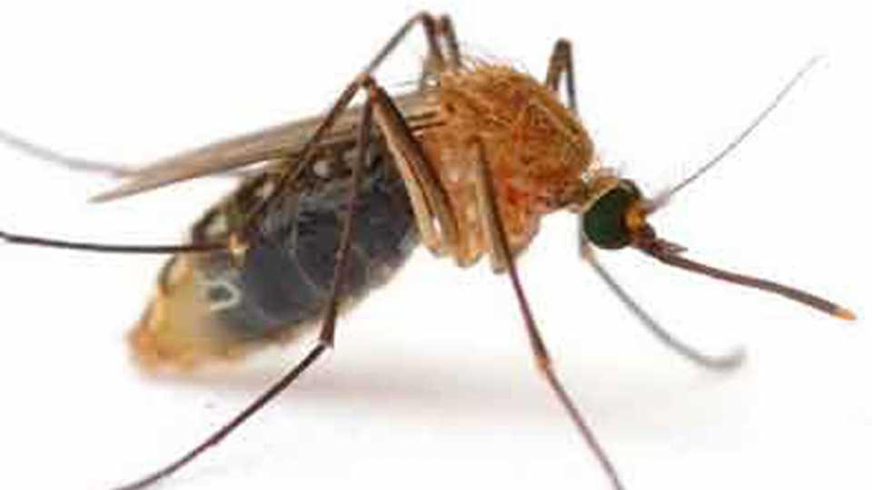 लखनौमध्ये डेंग्युच्या बळींच्या संख्या 148 वर