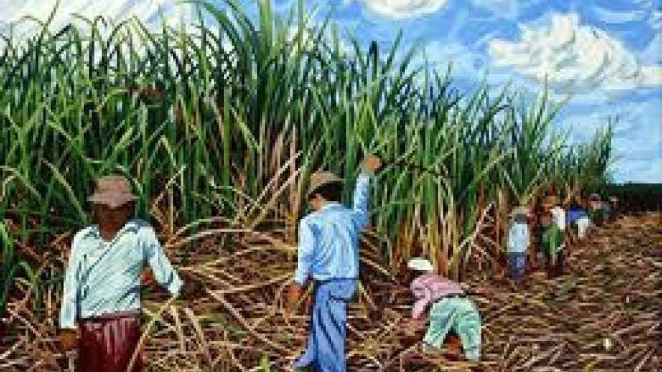 Sugarcane_