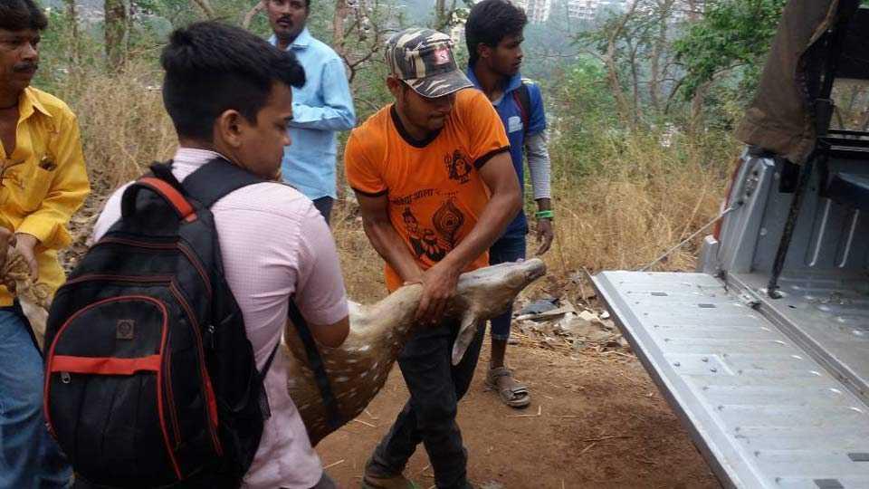 Deer was found dead at Mulund
