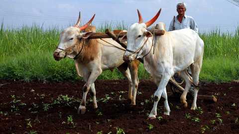 method to increase agri produce