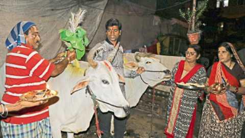 काचीपुरा - पोळ्याच्या पूर्वसंध्येला रविवारी सायंकाळी 'आज आवतन देतो, उद्या जेवायला ये', असे म्हणत बैलांचे खांदे शेकताना शेतकरी कुटुंब.