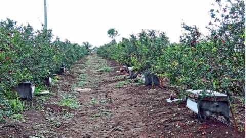 पिकामध्ये मधमाश्यांच्या पेट्या ठेवून उत्पादनवाढीसोबतच मधमाश्यांचे संरक्षण आणि संवर्धन करणे शक्य होते.